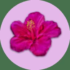 logo cogilog is