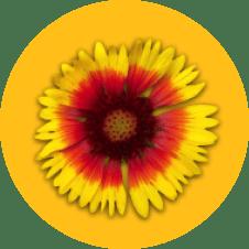 logo cogilog TVA